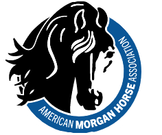 A photo of a black horse and blue circle for the American Morgan Horse Association logo